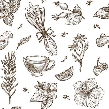 Fondo de dibujo de hierbas. Diseño vectorial sin costuras de té de hierbas con condimentos aromáticos de jengibre, fruta de flor de rosa o hierba de limón y manzanilla, jazmín o menta e hibisco o baya de fresa