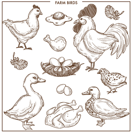 Farm birds with small nest made of brushwood, fresh eggs and cooked poultry. Big chicken and adult rooster, fluffy goose, small duck and spotty quail isolated vector illustrations on white background.