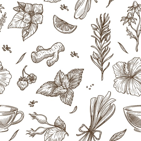Herbs sketch pattern background. Vector seamless design of herbal tea with aroma condiments of ginger, rose flower fruit or lemongrass and chamomile, jasmine or mint and hibiscus or strawberry berry Vectores