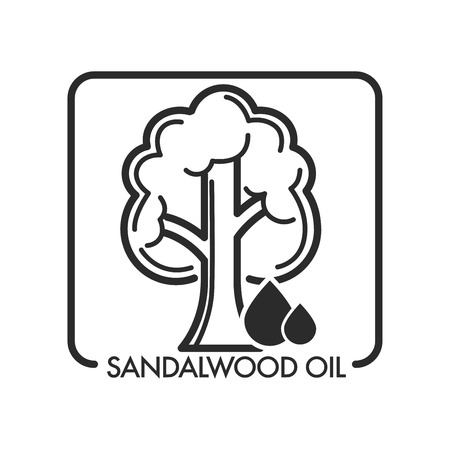 Sandalwood oil tree and drop of aromatic liquid for massages and beauty industry usage vector isolated icon of flora and oily ingredient for spa and medicine purposes perfume natural scent relaxation
