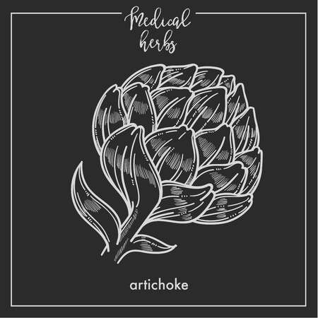 Artichoke medical herb sketch botanical design icon for medicinal herb or phytotherapy herbal tea infusion package. Vector isolated artichoke plant flower symbol for herbal natural medicine Illustration
