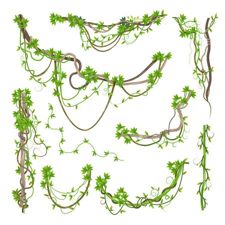 Lianen- oder Dschungelpflanzengrün gewundene Zweige Vektorgrafik