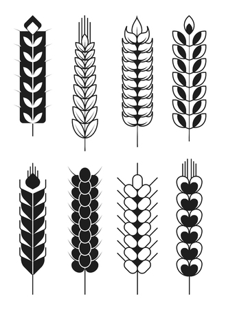 Spikelets icons or cereal wheat or rye ears and spike stalks.