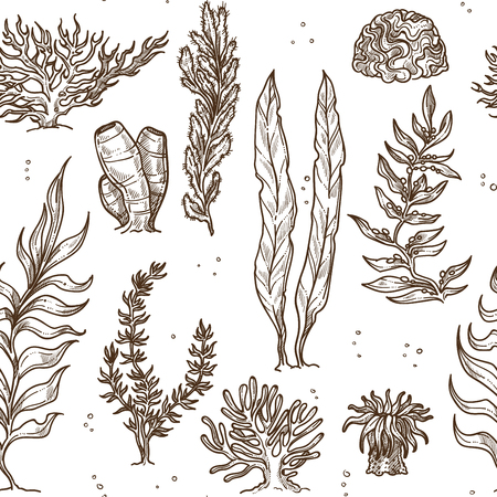 Underwater plants seaweed and corals and sponges monochrome seamless pattern leaves and bushes sea and ocean greenery water vegetation wild bottom species endless texture stems and sprouts sketches.