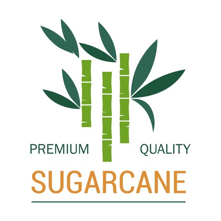 Organic sugar and sugarcane plantation vector planting and production organic plant product natural sweetener food and drink additive or condiment greenery agriculture and industrial cultivation Illustration