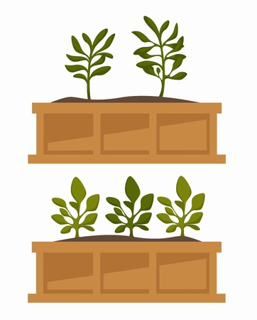 Plants in boxes greenhouse plantation growing and cultivation botany vector gardening flower tree or bush sprout indoor and outdoor greenery in flowerbed soil ground in wooden container vegetation.
