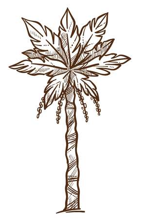 Palm tree with foliage on branches monochrome sketch outline isolated icon vector tropical plant seaside botanical flora growing on beaches exotic decoration summer season colorless flat style.