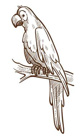 Macaw parrot on branch tropical species isolated sketch vector exotic animal with wings and plumage beak and and claw wild nature fauna large flying creature talking ability jungle and rainforest. Ilustração