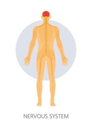 Cerveau et terminaisons nerveuses système nerveux anatomie isolée médecine vectorielle et biologie des soins de santé modèle éducatif connexion fonctionnement neurologique pensée et réflexes ou réaction et mouvement