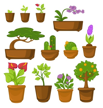 Trees and flowers indoor plants cactus and bonsai calla and rose vector sprouts orchid and iris orange in pots growing and cultivation natural decor greenery interior decoration windowsill plantation. Illustration
