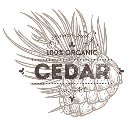 Cedar nut spice or natural condiment isolated icon with lettering