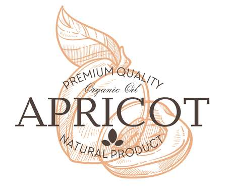 Apricot fruit isolated icon with lettering farm product