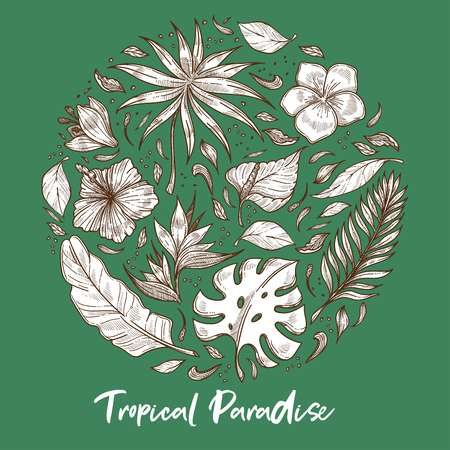 Tropical paradise palm leaves and exotic flowers sketch vector plants hibiscus and calla plumeria bud and trees foliage wild greenery botany and rainforests or jungle flora blossom and bushes.