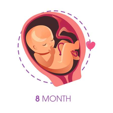 Pregnancy stage 9 month embryo in uterus with umbilical cord vector unborn baby growth fetus development human being evolution motherhood trimester medicine and health calendar female reproduction.