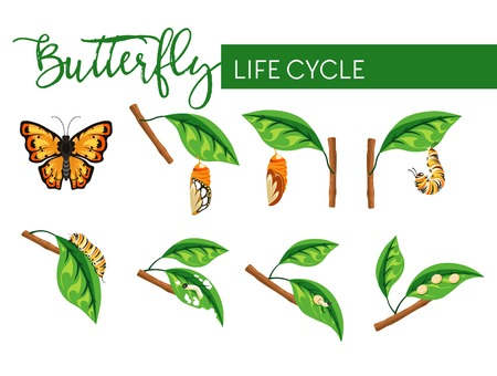 Insect butterfly life cycle larva transformation isolated stages