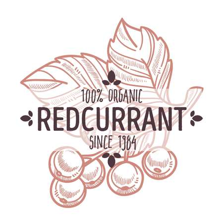 Redcurrant isolated icon with lettering organic bush berry
