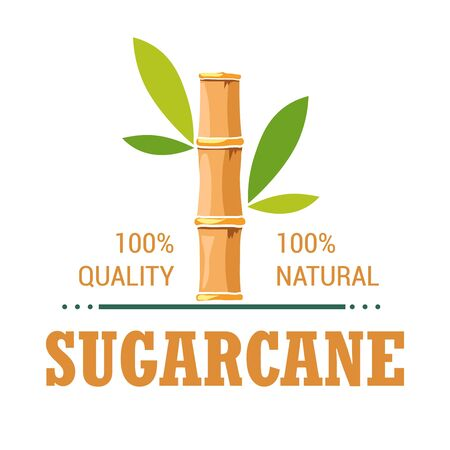 Natural organic product sugarcane isolated icon plantation