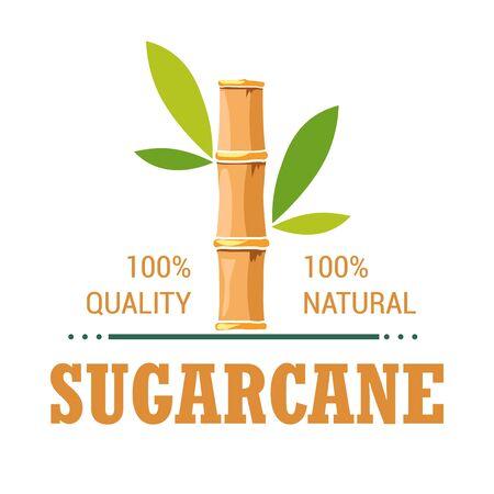 Natural organic product sugarcane isolated icon plantation