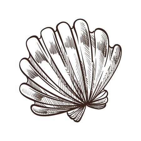 Shell or seashell, conch or mollusk isolated sketch, marine symbol