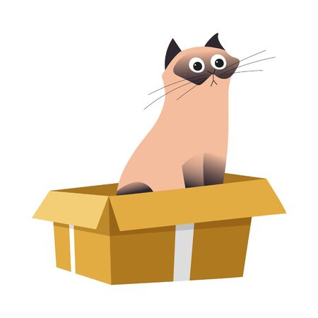 Cat in box, Siamese breed and cardboard container, pet or domestic animal