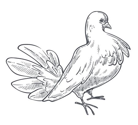 Pigeon or dove bird hand drawn sketch