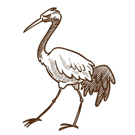 Asian wild bird, heron, wader or stork isolated sketch
