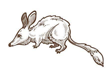 Australian mouse, great bilby isolated sketch, bandicoot Banco de Imagens - 131920575