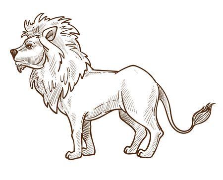 Wild cat, lion isolated sketch, African fauna animal Ilustração