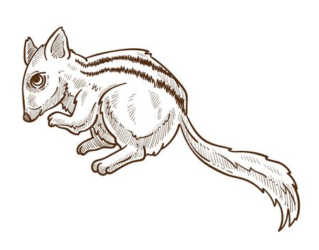 Chipmunk with striped back, squirrel isolated sketch drawing