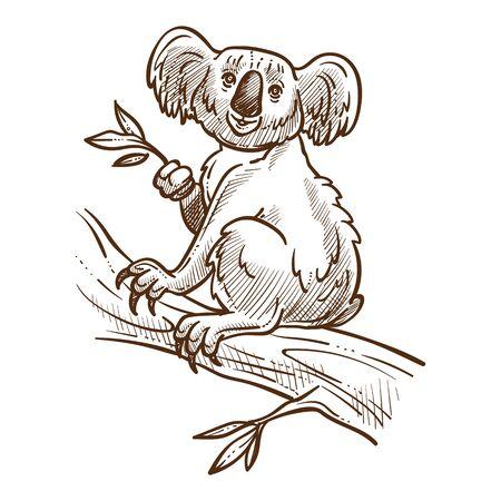 Australijski symbol, miś koala na gałęzi drzewa jedzący eukaliptus