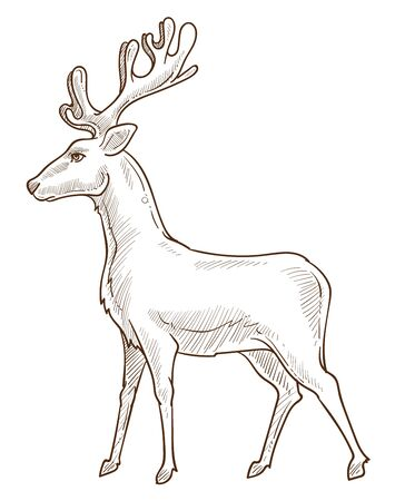Reindeer or deer, stag or fawn isolated sketch drawing Ilustrace