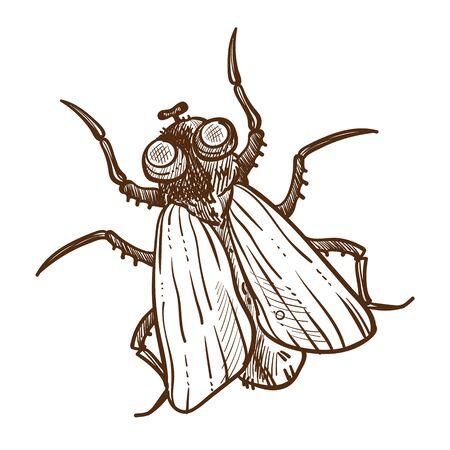 African insect, tsetse fly isolated sketch, flying insect or bug