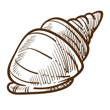 Conch or shell isolated sketch, spiral shellfish, underwater clam