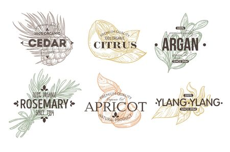 Plant and food herbs spices and fruit isolated icon with lettering vector cedar and citrus argan and rosemary apricot and ylang ylang lemon and nut silhouette emblem or logo cooking ingredients Ilustração