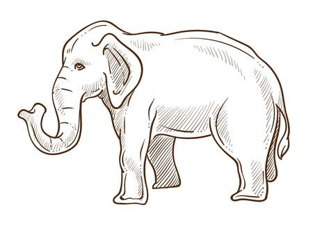 Elephant animal standing side view hand drawn sketch illustration
