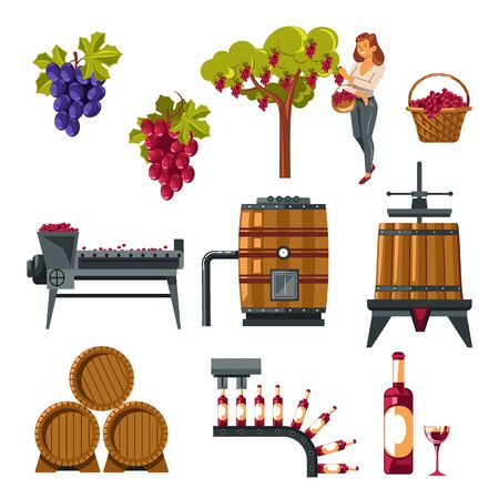 Winemaking process illustrated from grapes growing till wine bottling Illustration
