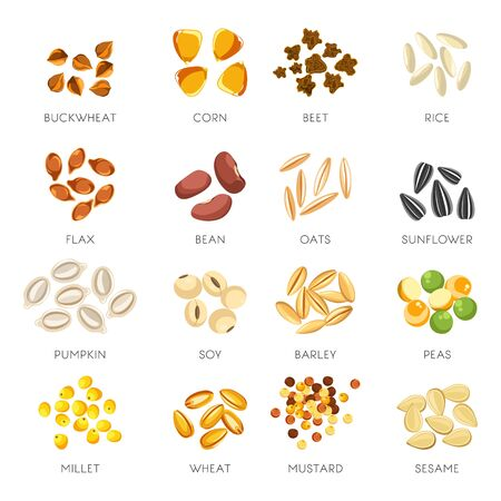 Seeds and grains isolated icons, organic cereal food Ilustración de vector