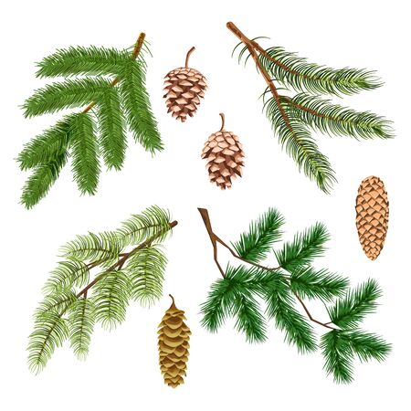 Pine or fir, Christmas tree conifer branches and cones isolated icons Иллюстрация