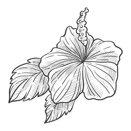 Hibiscus flower plant with leaves hand drawn sketch illustration Illusztráció