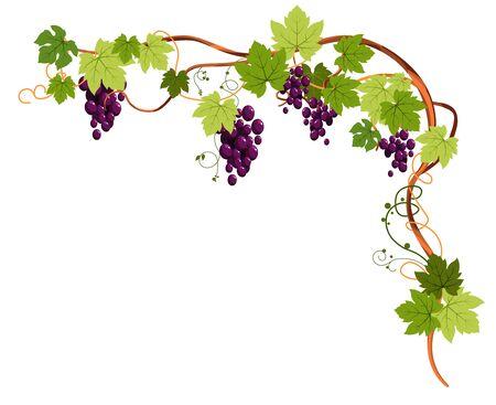 Plante de vigne avec raisins et vrilles pour cadre d'angle supérieur Vecteurs