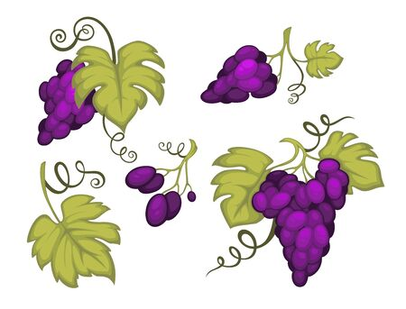 Grapes bunches with leaves isolated icons, berries clusters