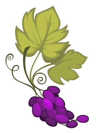 Wine grapes cut fruit with leaves and swirling tendrils Ilustração