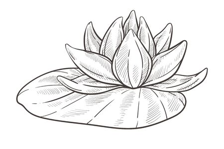 Water flower isolated sketch, lotus bud with leaf