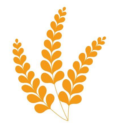 Spikelets of wheat or barley, crop grain vector
