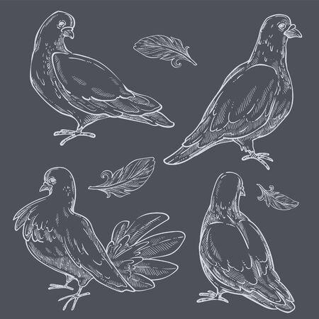 Pigeons monochrome set, doves wild birds with plumage Vektorgrafik