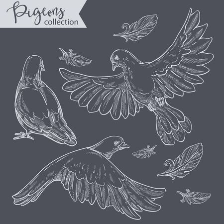 Flying pigeons, set of doves with plumage vector Stock Illustratie