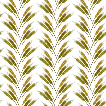 Wheat spikelets in rows, agriculture and harvesting seamless pattern