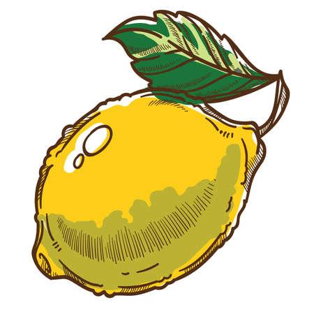 Lemon with leaf, citron fruit organic ingredient vector