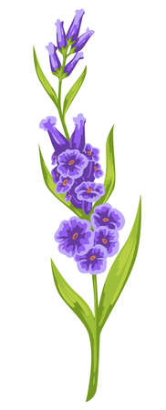 Purple flower with green leaves, blooming flora vector