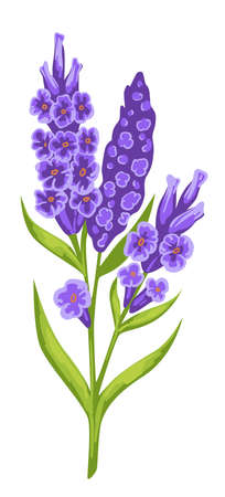 Violet blooming flowers with green stem, spring blossom